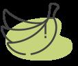 פירות פרימיום